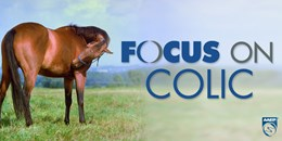 Focus on Colic